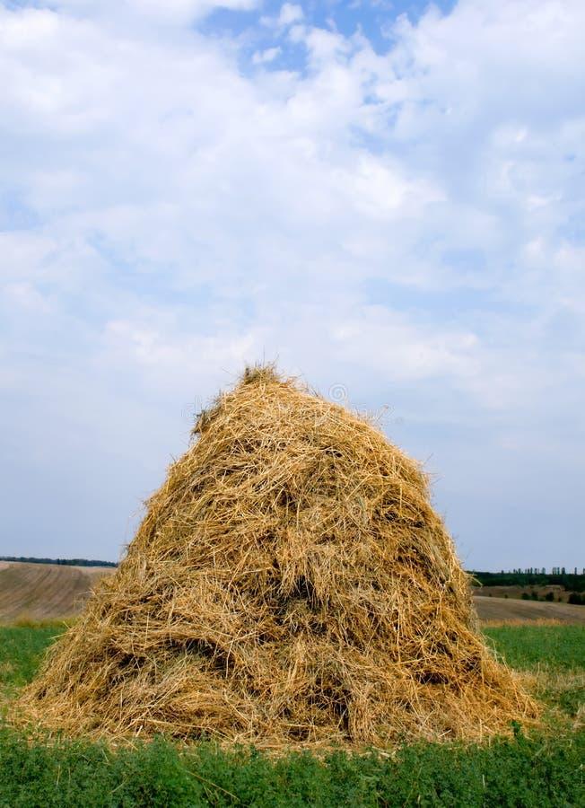 Free Haystack Hay Straw Royalty Free Stock Photo - 6343035