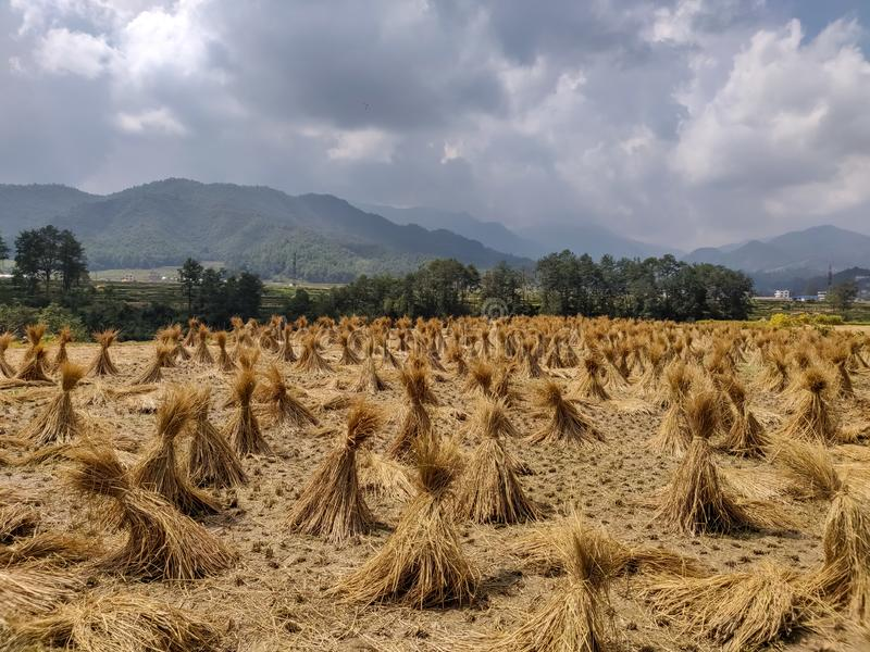 Haystack after mowing the field royalty free stock image