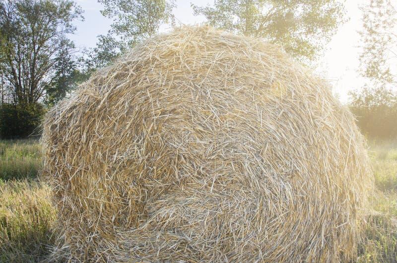 Haystack na polu w backlight fotografia royalty free