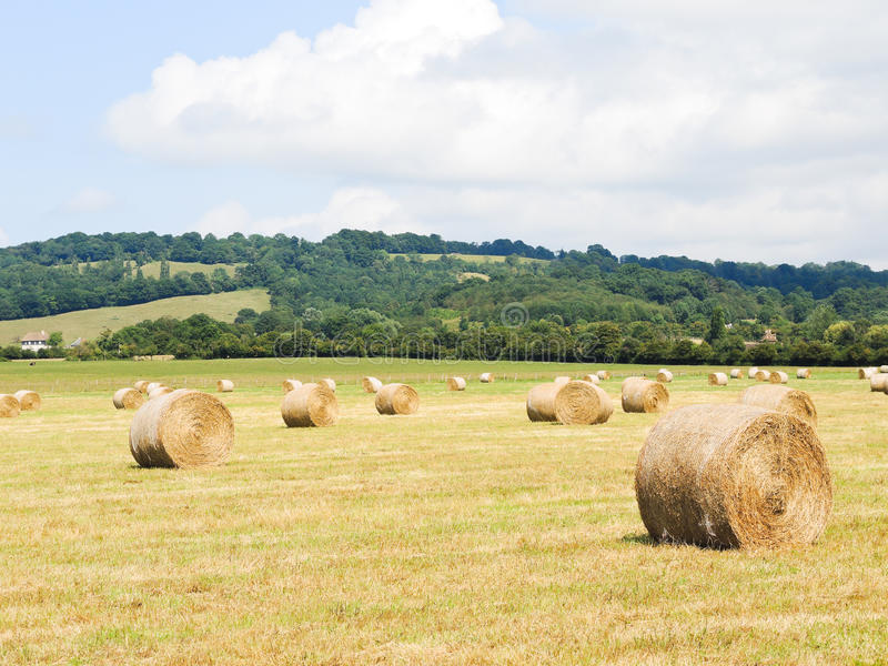 Haystack rolls on harvested field in Normandy stock photo