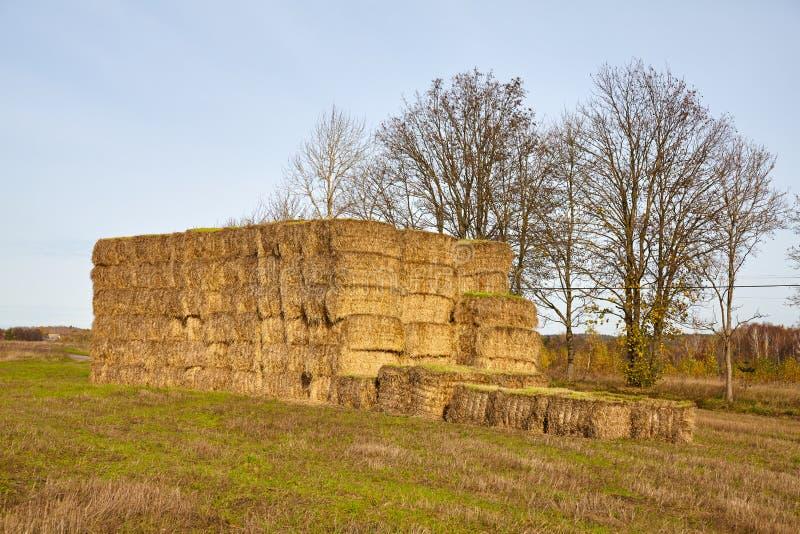 Haystack su un campo in autunno immagine stock