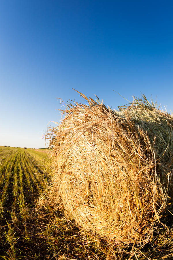 Haystack in wheat field. Autumn harvest concept. Shot was taken with fisheye lens royalty free stock images