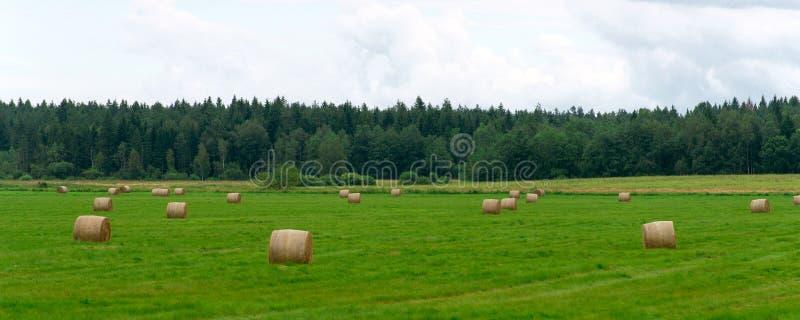 haystacks поля зеленые стоковое фото rf