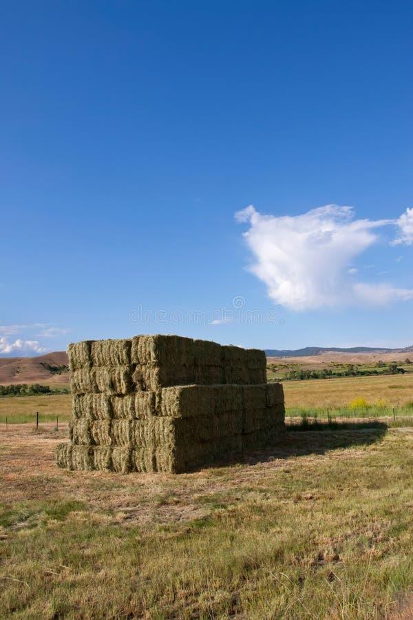 Download Haystacks stock image. Image of agriculture, crop, farming - 14019343