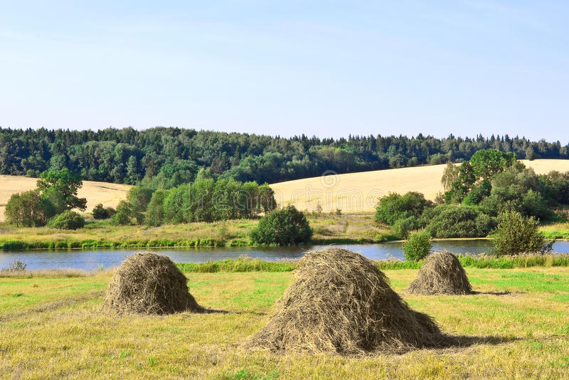 Download Haystacks stock photo. Image of field, herb, nature, background - 20474384