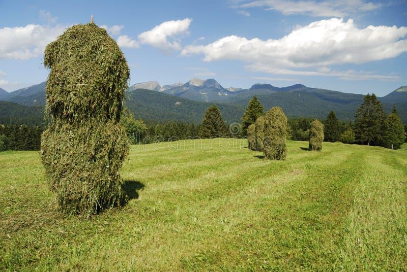 Download Haystacks stock image. Image of grass, meadow, haystacks - 22397313