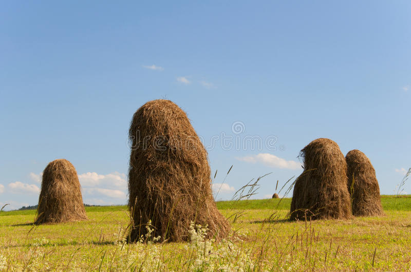 Download Haystacks stock image. Image of plant, grass, bale, sunny - 26814737