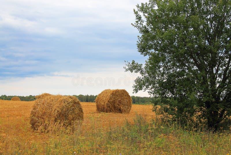 Download Haystacks stock photo. Image of harvest, nature, away - 26933378