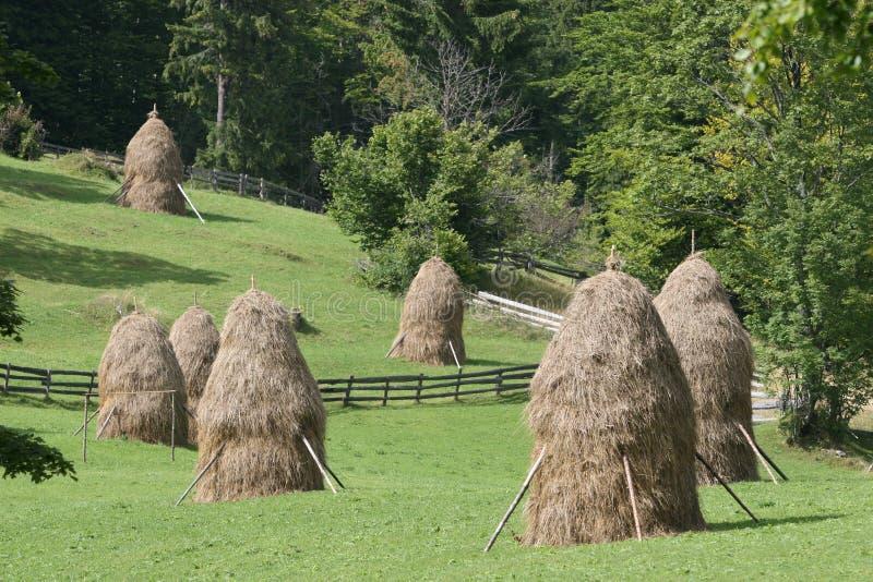 Download Haystacks stock photo. Image of harvest, landscape, four - 28232614