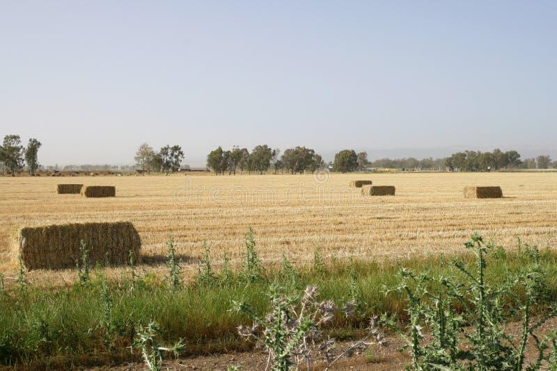 Download Haystacks stock photo. Image of spaces, pratums, field - 4979512
