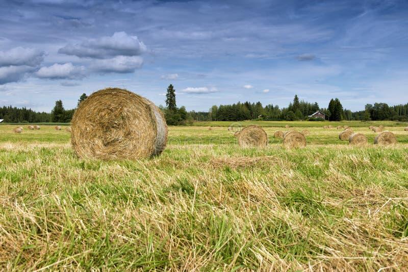haystacks fotografia stock libera da diritti