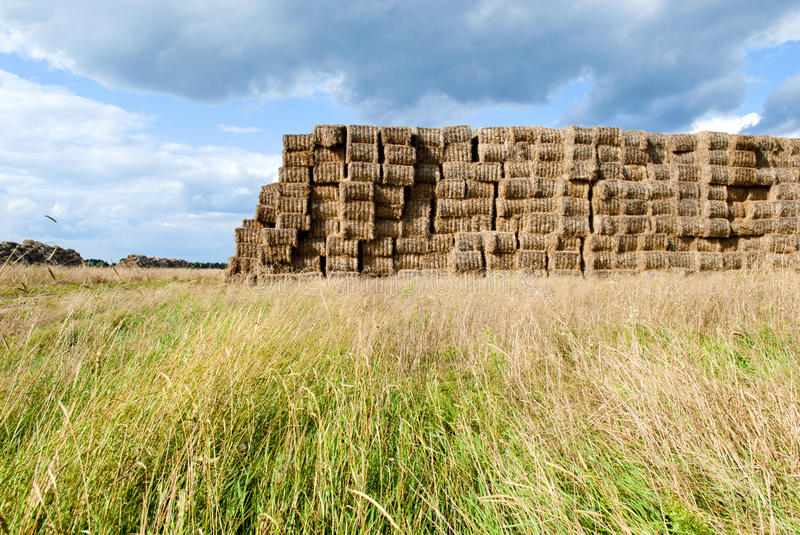 Download Haystacks Bales In Countryside Stock Photo - Image of harvest, gold: 16437556