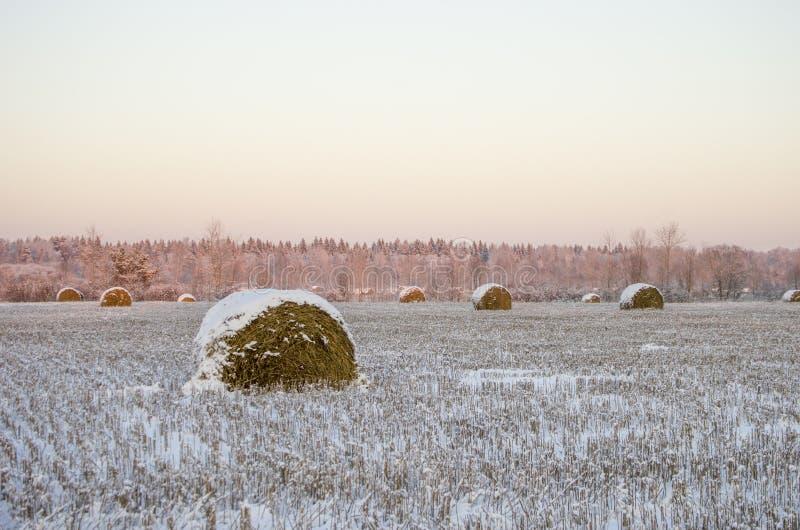 Haystacks en el campo congelado imagen de archivo