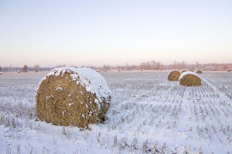 Haystacks en el campo congelado fotografía de archivo libre de regalías