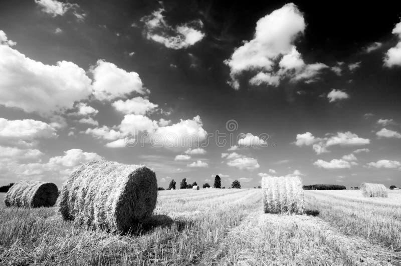 Haystacks In The Field Stock Image