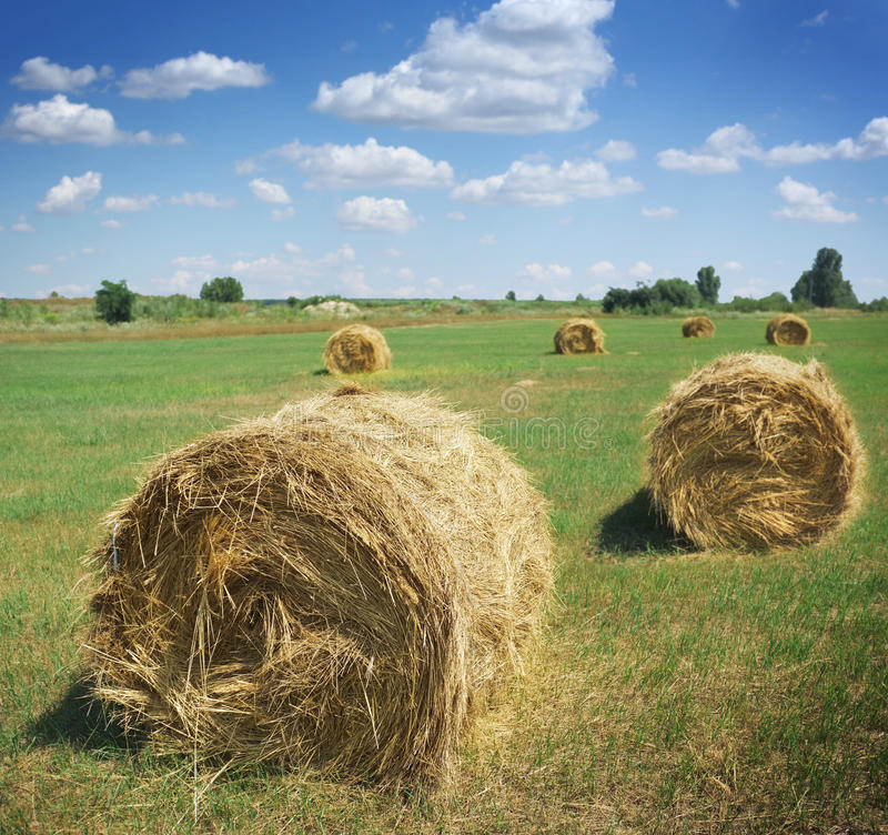 Download Haystacks on the field stock image. Image of bale, cereal - 25960355