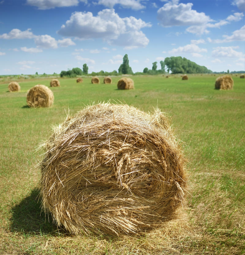 Download Haystacks on the field stock photo. Image of pile, field - 26043914