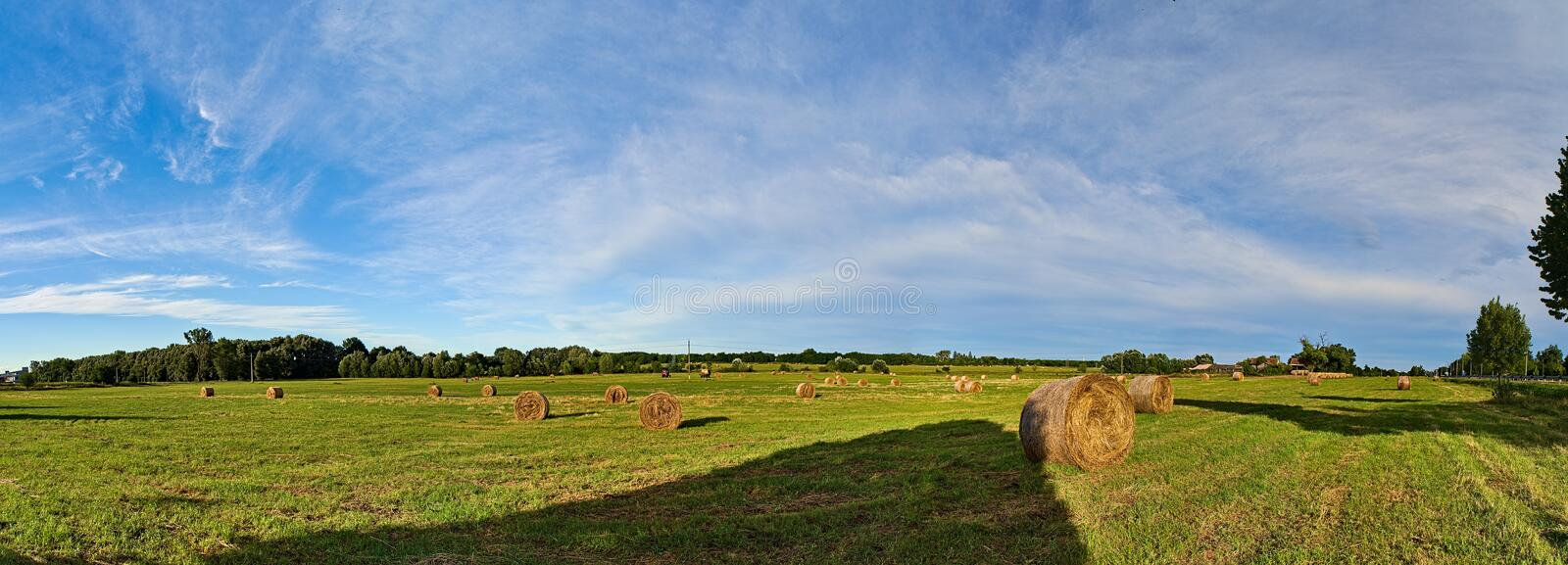 Haystacks on field after reaping.  stock photography