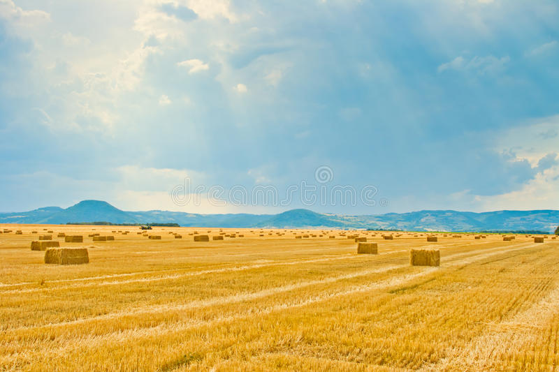Download Haystacks in the fields stock image. Image of land, landscape - 20624349