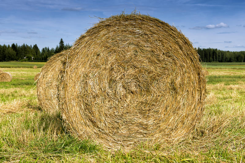 Haystacks. royalty free stock photography