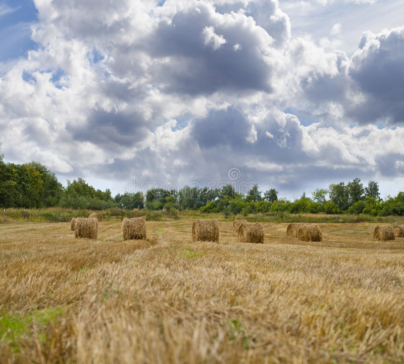 Haystacks on the grain field after harvesting. Straw Haystacks on the grain field after harvesting royalty free stock photos
