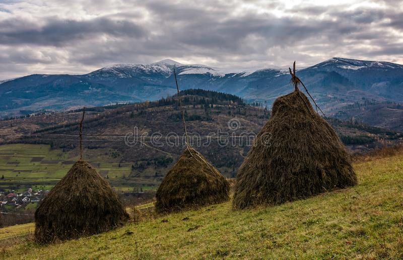 Haystacks on grassy meadow in autumn mountains stock images