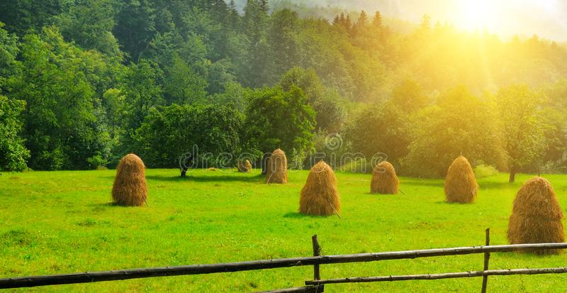 Haystacks on a green meadow. Wide photo royalty free stock photography