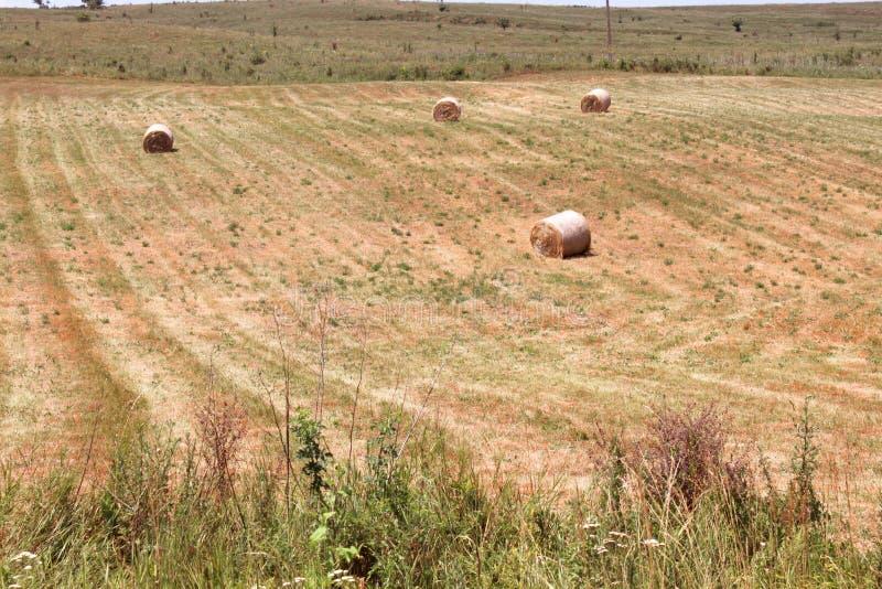 Download Haystacks after harvest stock image. Image of bread, corn - 29302511