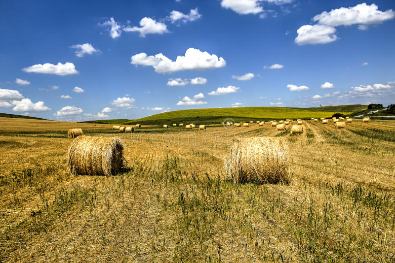 Haystacks after harvest stock photos