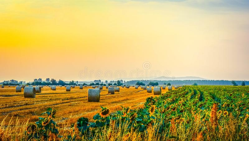 Haystacks i słoneczniki obrazy royalty free