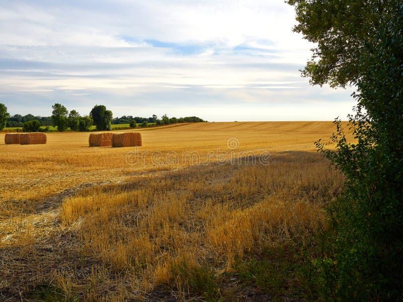 Haystacks w szerokim zaoranym polu zdjęcie royalty free