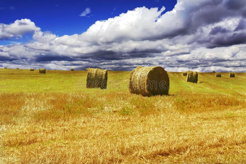 Download Haystacks on yellow field stock photo. Image of farmland - 8470238