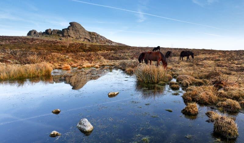 Haytor, stationnement national de Dartmoor image stock