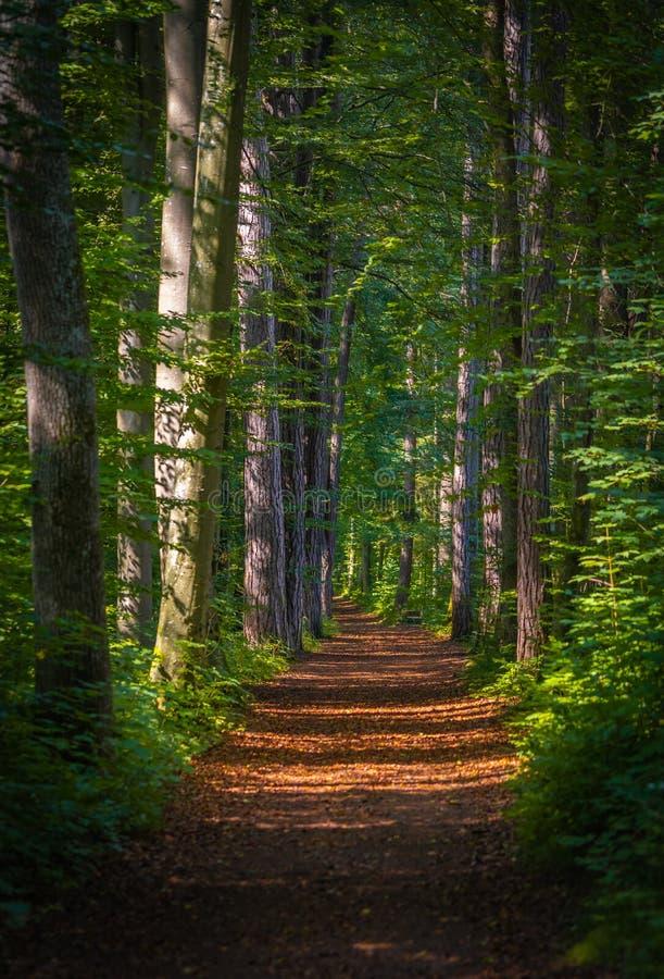 Haz de Sun en un camino en un bosque foto de archivo libre de regalías