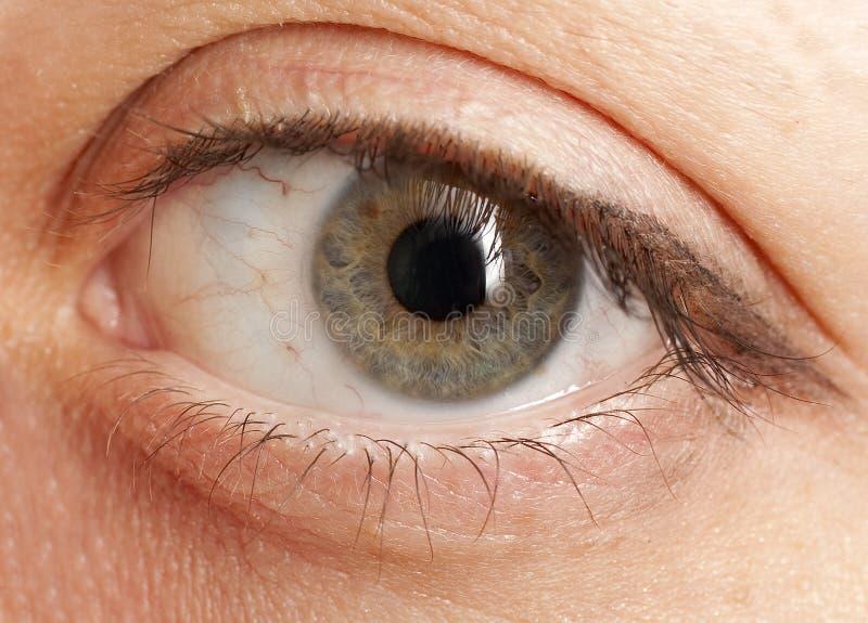 hazel глаза стоковые изображения