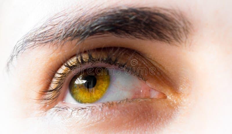 Hazel eye stock photos