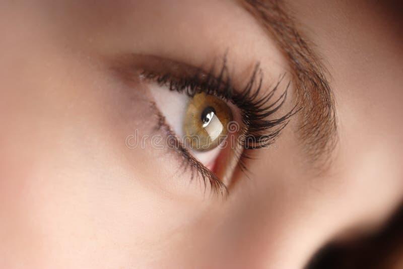 Hazel eyes. Girl stock photography
