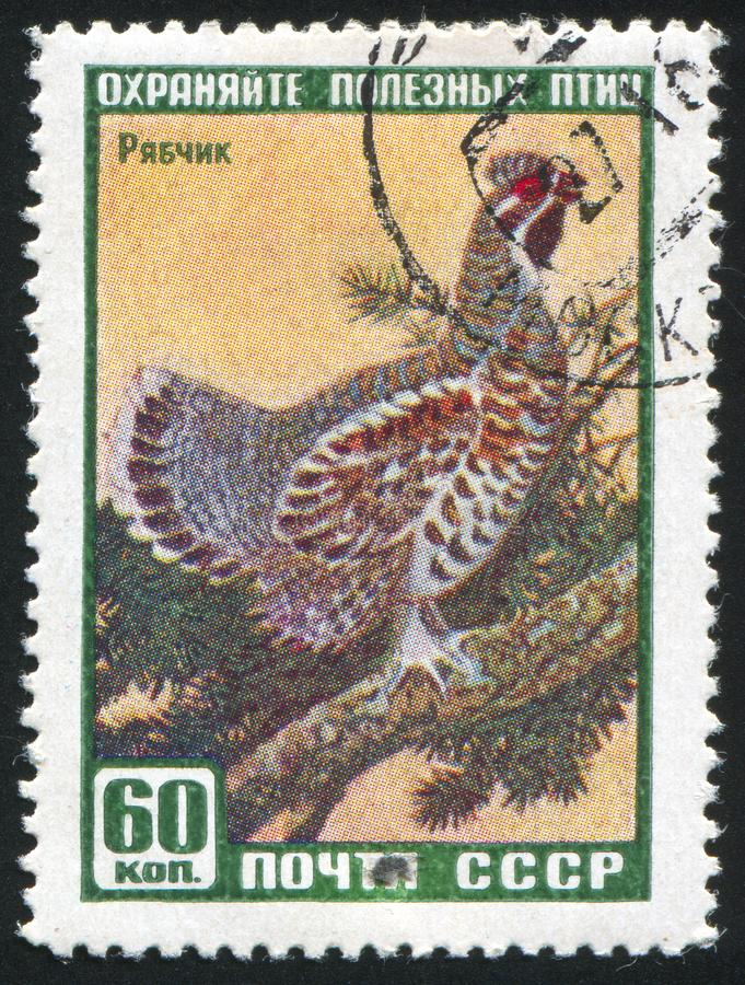 Hazel-grouse. RUSSIA - CIRCA 1957: stamp printed by Russia, shows Hazel-grouse, circa 1957 stock images