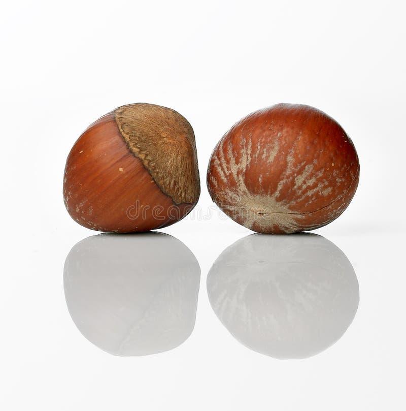 Hazel nut stock images