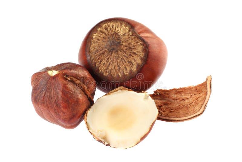 Hazel nut. Group isolated on white background royalty free stock image