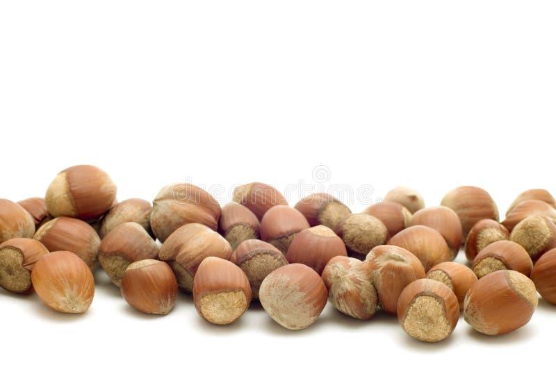 Hazel nut close up. Object on white - food hazel nut stock photography