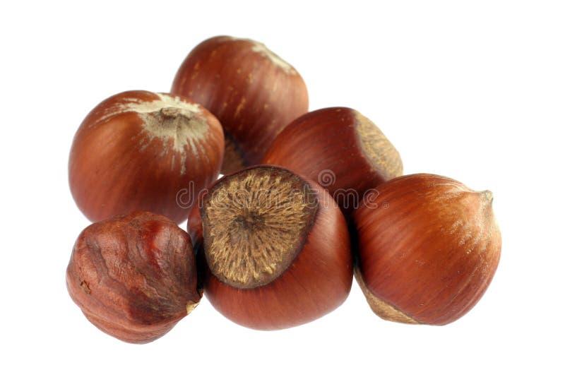 Hazel nut detail. Hazel nut group isolated on white background royalty free stock images