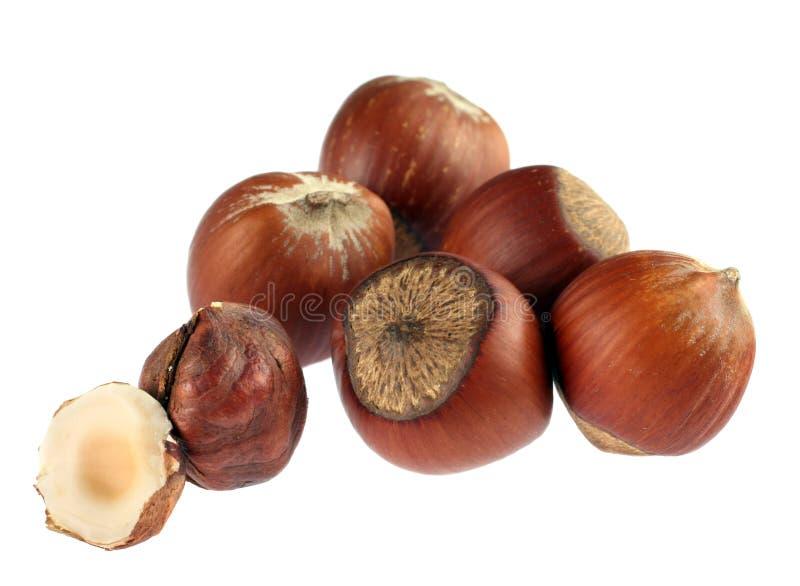 Hazel nut detail. Hazel nut group isolated on white background royalty free stock photos