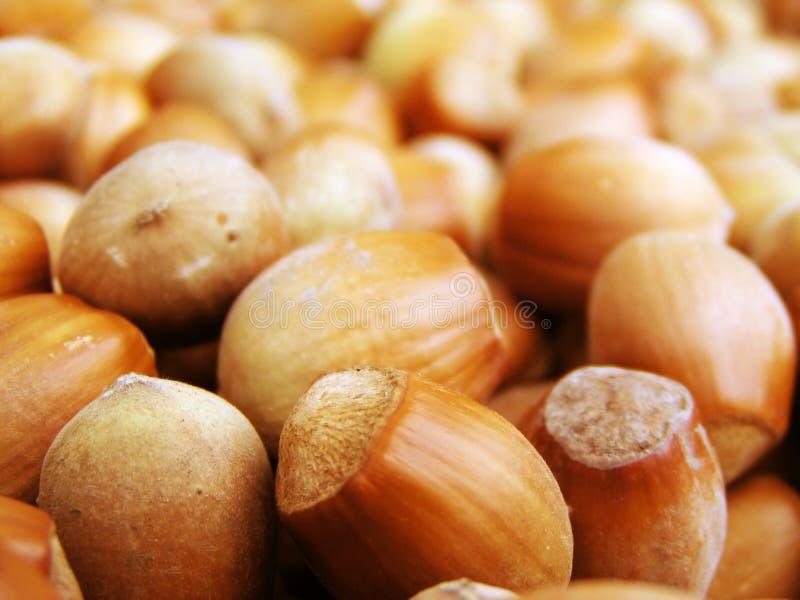 Hazel nuts. A lot of hazel nuts stock photo