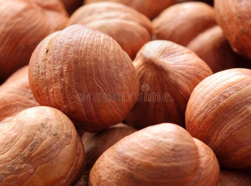 Download Hazel nuts stock photo. Image of nutrition, nuts, food - 30362010