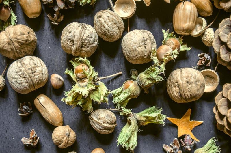 Hazelnoten met droge peduncle, noten, denneappels, eikels op zwarte achtergrond royalty-vrije stock foto