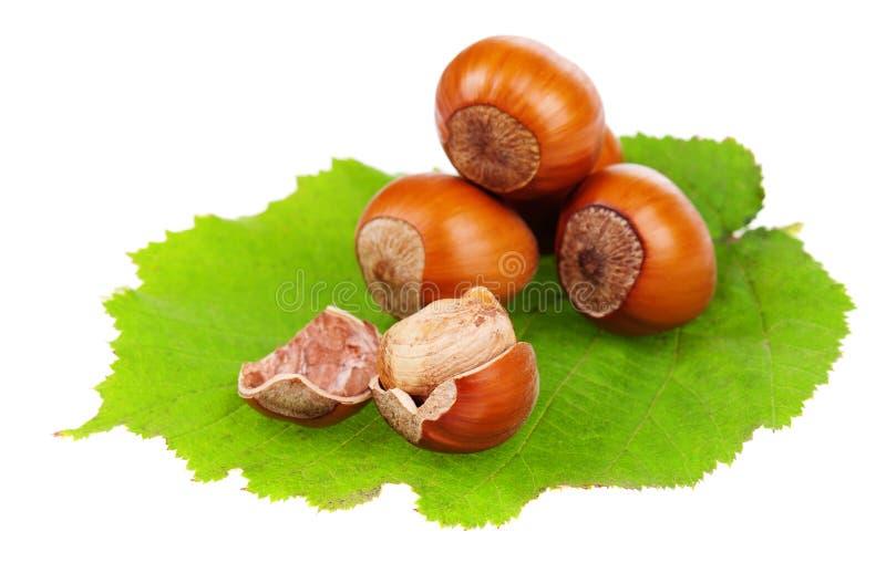 Download Hazelnut stock photo. Image of nutshell, ingredient, filbert - 21428326