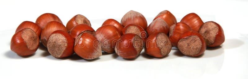 Hazelnut. On a white bagground stock image
