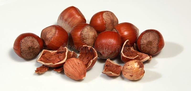 Download Hazelnut stock photo. Image of eating, studio, color - 22310788