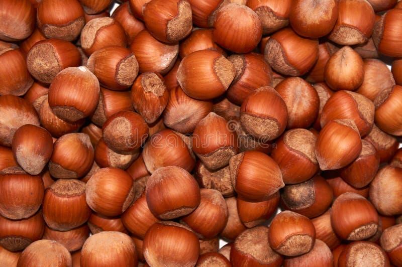 hazelnut Avelã orgânica fresca Macro Nuts Fundo do alimento foto de stock royalty free